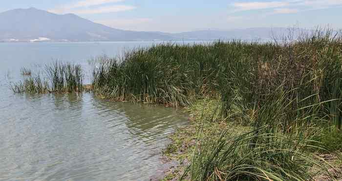 El Lago de Chapala. Foto: Cuartoscuro.
