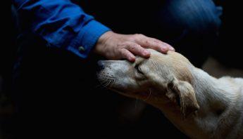 Dexis Casadiego, veterinario y uno de los fundadores del refugio privado Funasissi, acaricia a un perro abandonado. Foto: AP