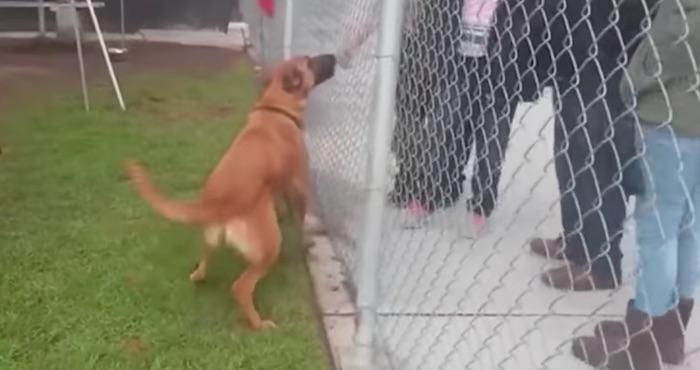 Perrita abandonada en un refugio reconoce a sus dueños cuando iban a adoptar otro perro (VIDEO)