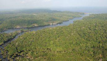 Las regiones tropicales fueron responsables del 60 por ciento de la reducción total del área intacta de paisaje forestal. Foto: EFE.