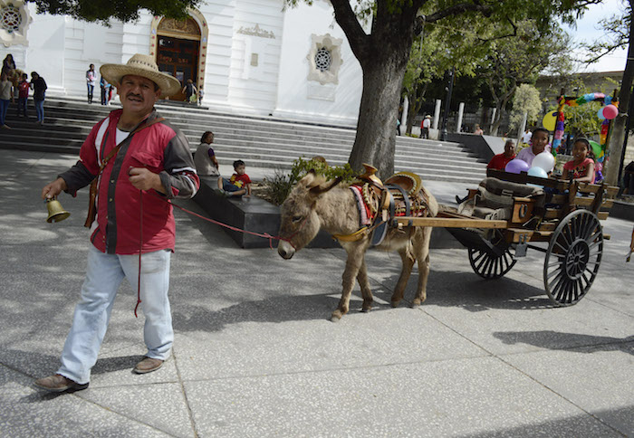 Un burro jala una carreta con personas a bordo. Foto: Cuartoscuro/Archivo.