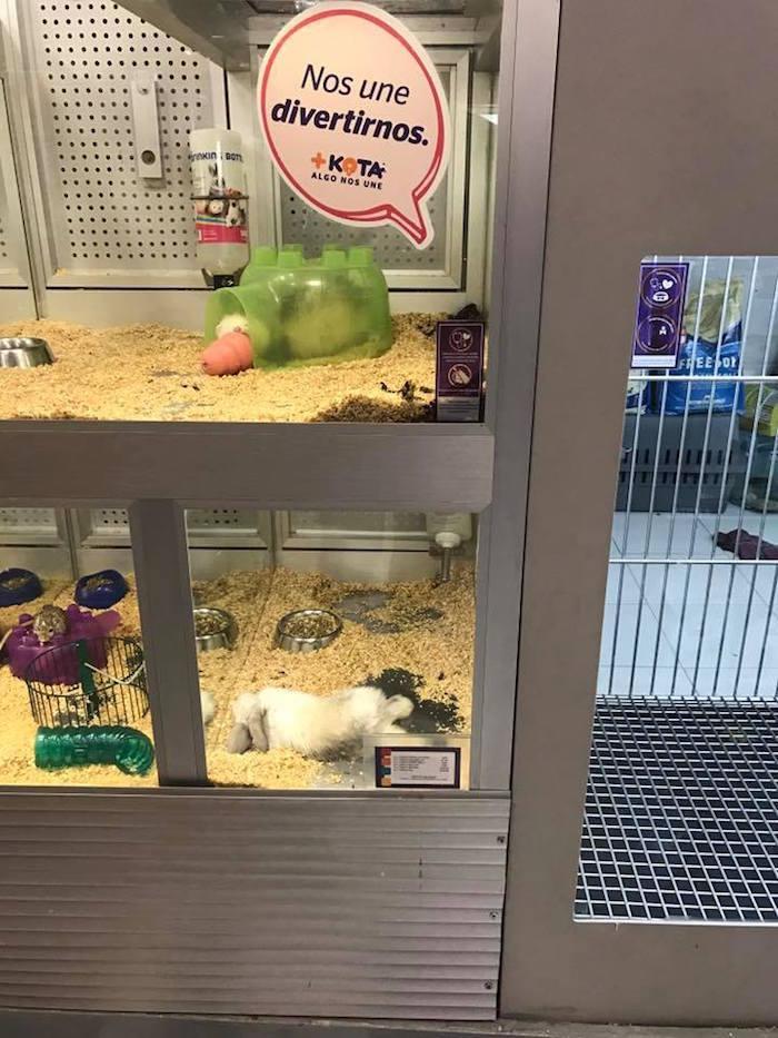 A shop Maskota it exhibits a dead rabbit in Pavilion ... - However 2