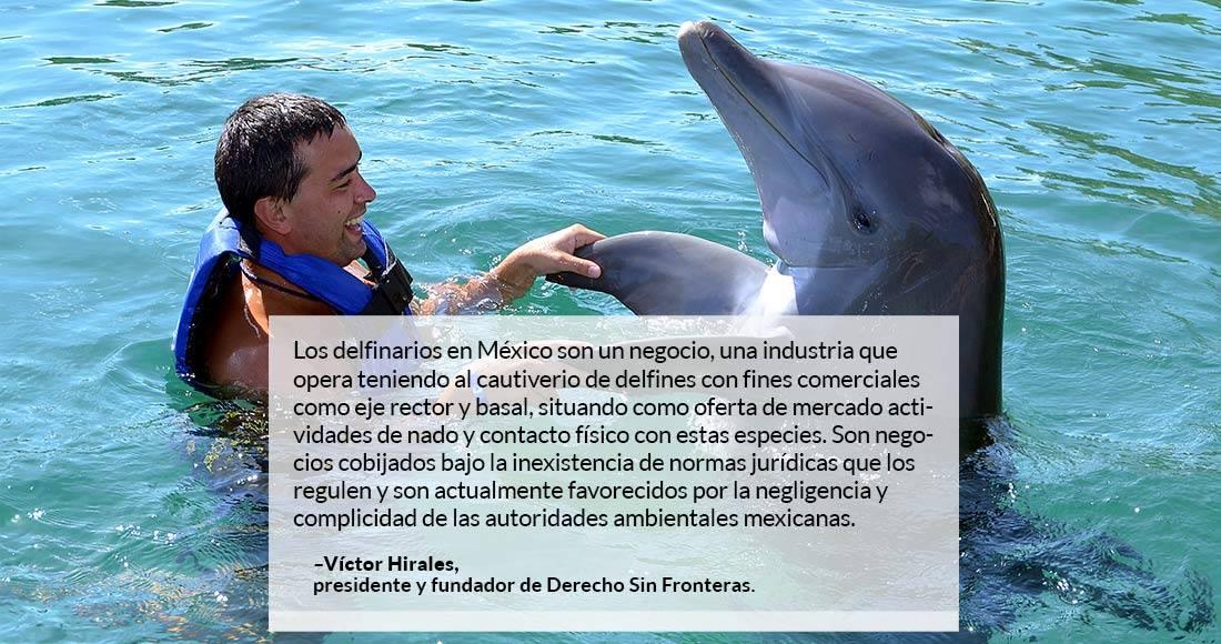 Prohíben en CDMX espectáculos con delfines