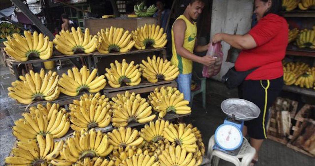 Científicos cultivan los primeros plátanos modificados genéticamente; esperan salvar 700 mil vidas