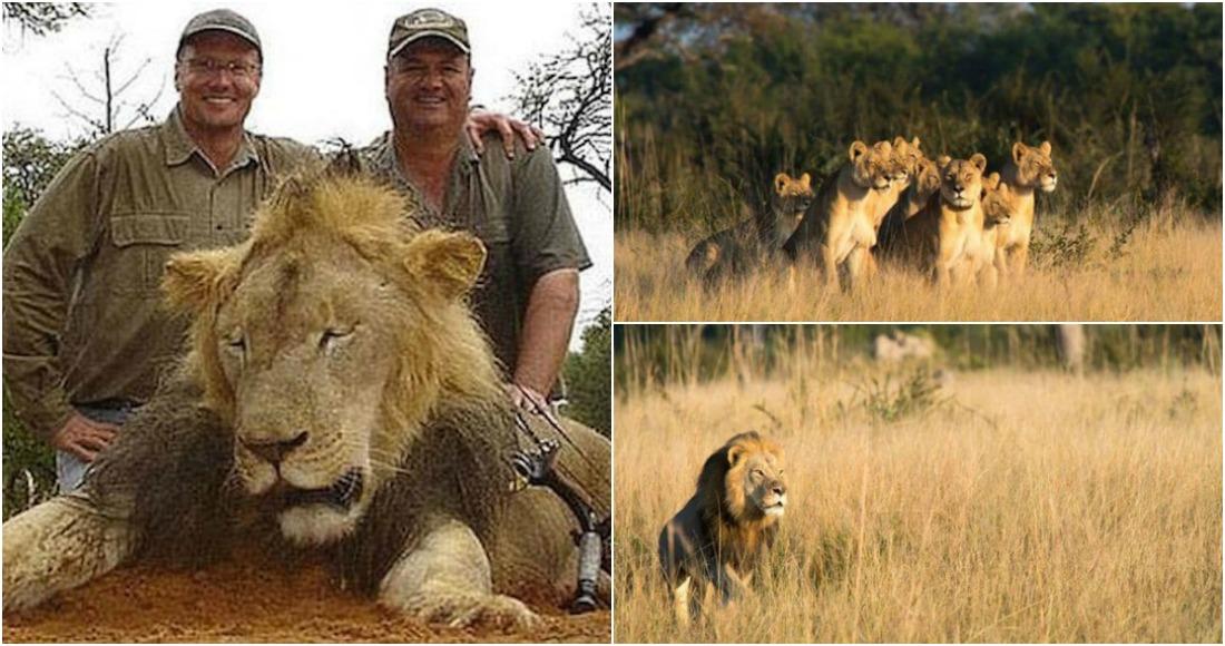 Cazador mata al hijo mayor del león Cecil en Zimbabwe — CHILE