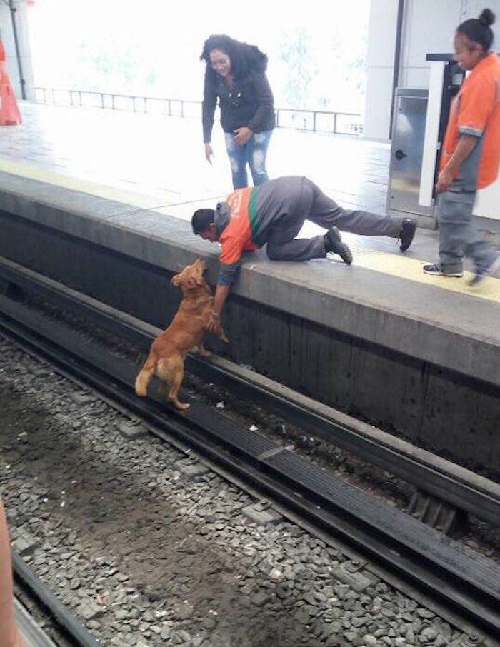 Denuncian falta de apoyo para rescatar a un perrito en el metro