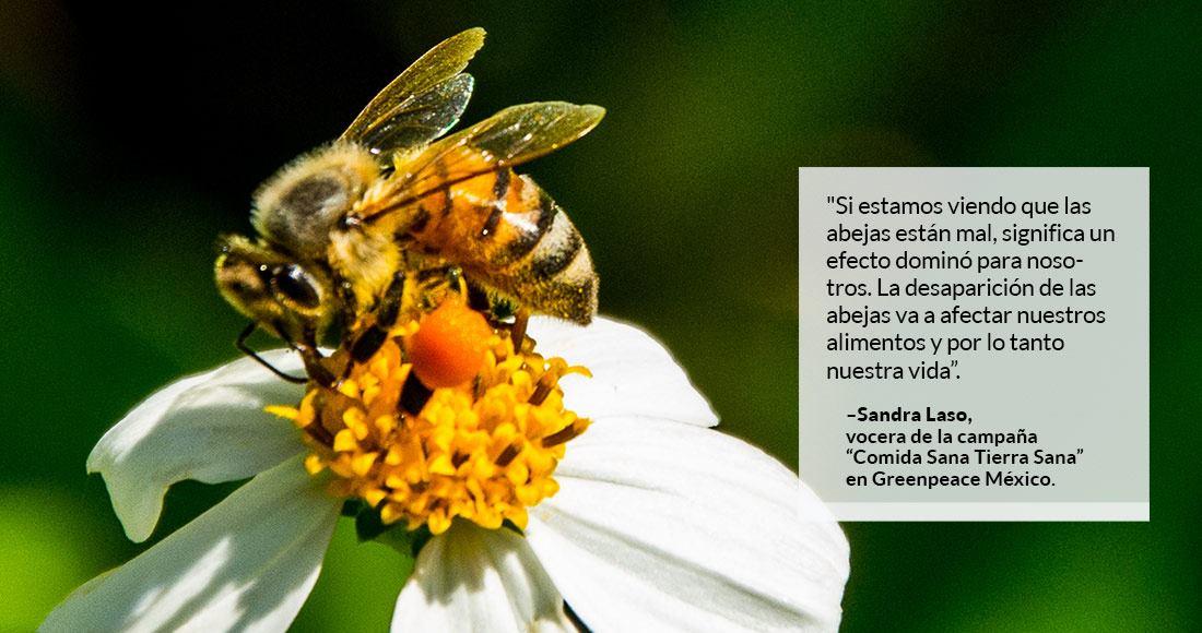 Resultado de imagen para agroquimicos mata abejas