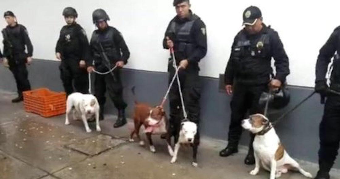Detienen a 6 en Tacubaya; los acusan de robo mediante perros