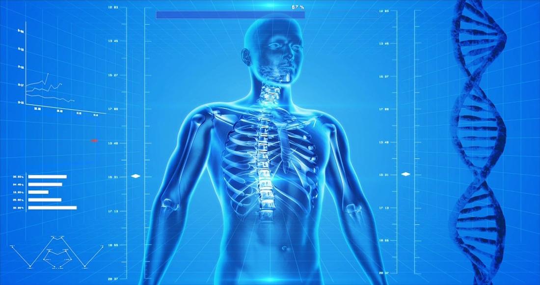 Científicos descubren la causa por la que el cuerpo humano ...