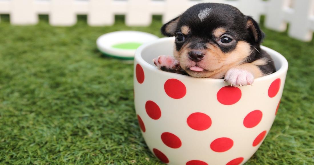 Los perros intentan comunicarse con nosotros con sus expresiones faciales — Científicos