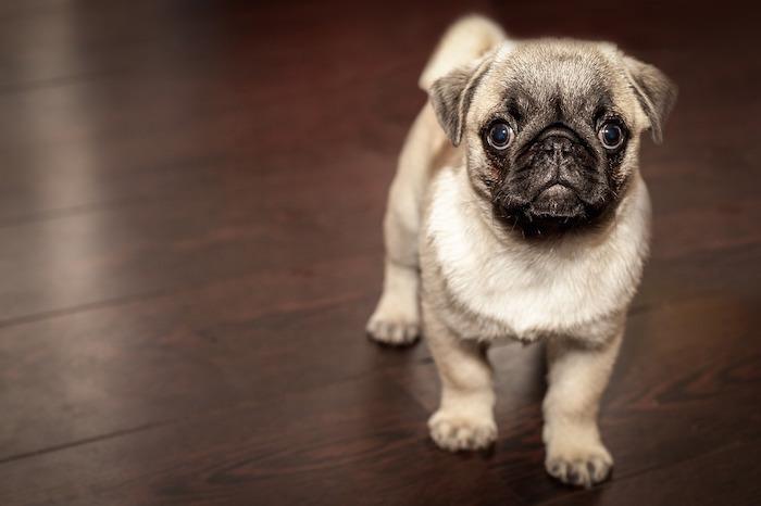 Estudio confirma que los perros se comunican con nosotros mediante expresiones faciales