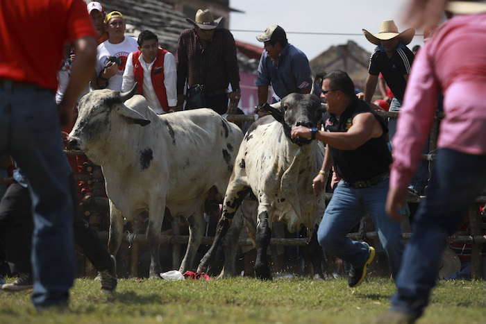 NGO seeks to eradicate fiestas and traditions cruel against the ... - But 1
