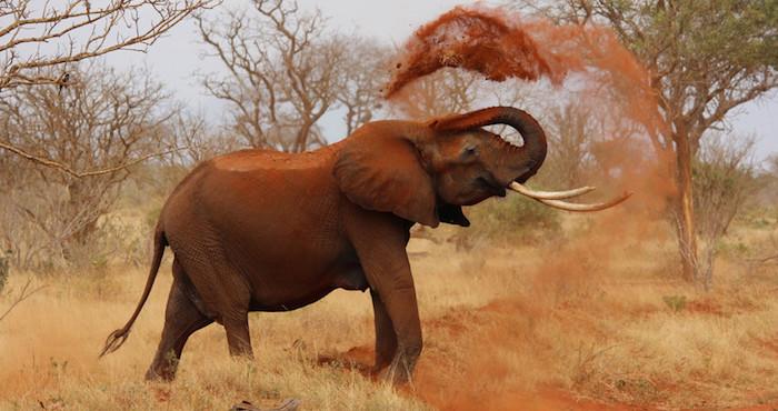 Trump autoriza caza de elefantes y leones