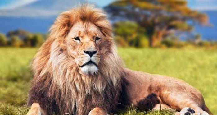 Ministro de Kenia culpa a homosexuales por comportamiento de leones machos