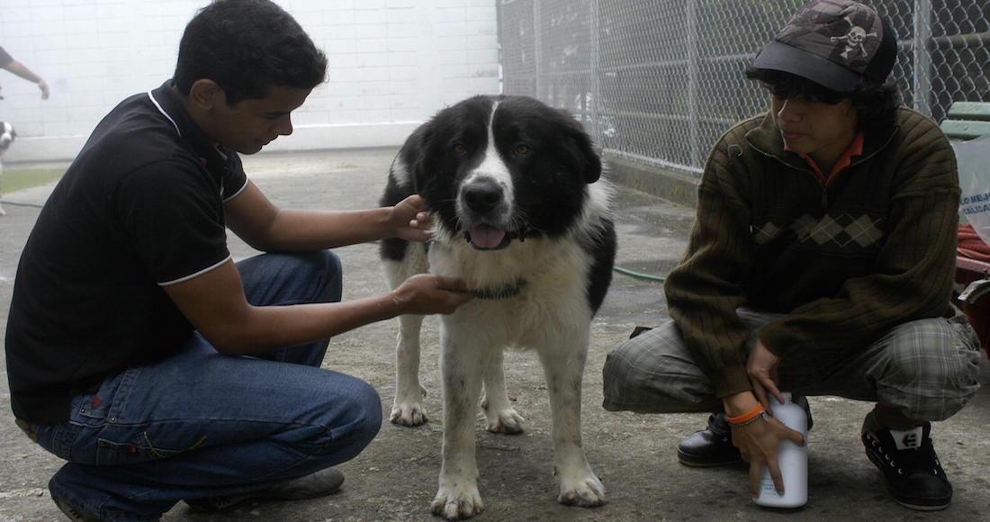 Mafia italiana ofrece 5000 euros por la cabeza de un perro policía