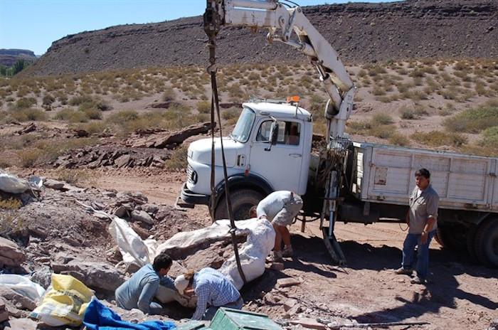 Hallaron restos de una nueva especie de dinosaurio en Neuquén