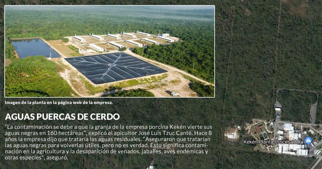 Granja de cerdos en Yucatán contamina el agua de cenotes y afecta la  producción de miel – SinEmbargo MX