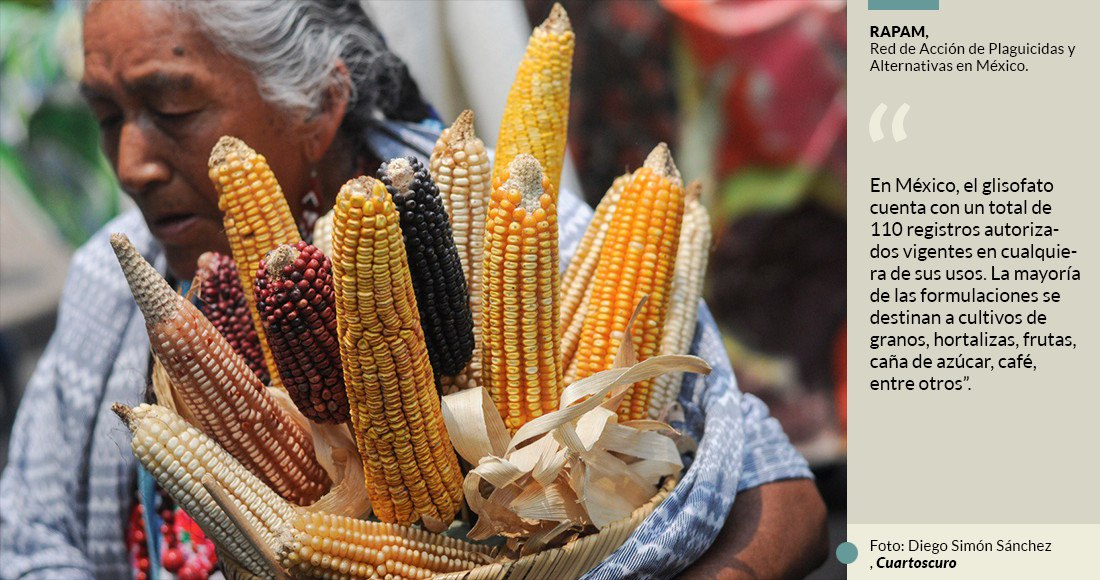 La Falta De Regulación Permite A Monsanto La Venta De