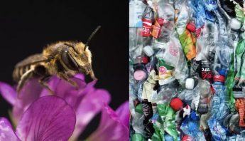 abejas-nidos-plastico