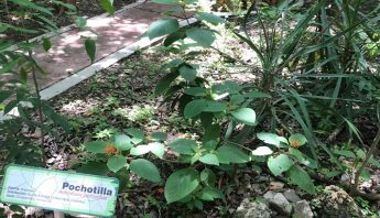 Plantas-medicinales-2