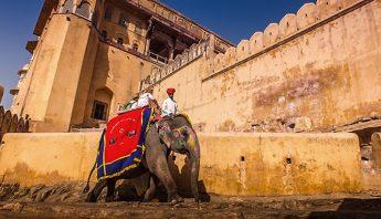 Elefante-Fuerte-Amber-India_EDIIMA20190806_0529_1