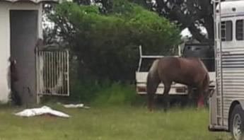 Captura de pantalla Comando armado carrera caballos