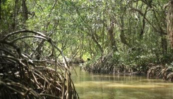 manglaresAlvaradoVeracruz
