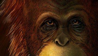 img_lflamarique_20191113-101818_imagenes_lv_otras_fuentes_12-gigantopithecus-comp-1029-imageonly1200-kYGG-U471572243491MAH-992×558@LaVanguardia-Web