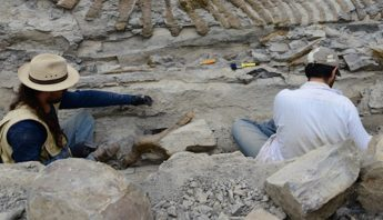 Nacimiento_micrositio_del_Consejo_Paleontologi769a-3