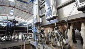 vacas1