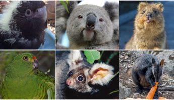 especies-peligro-extincion