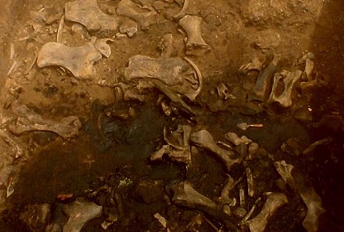Muestra de las excavaciones. Foto: La Brea Tar Pits