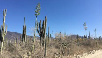 desiertomezcal