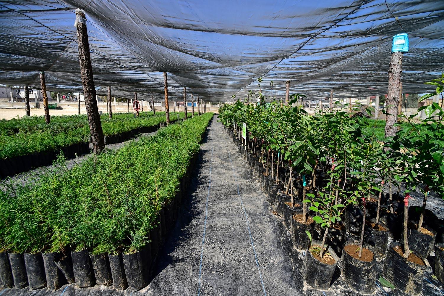 arboles-siembra-sembrando-vida-veracruz