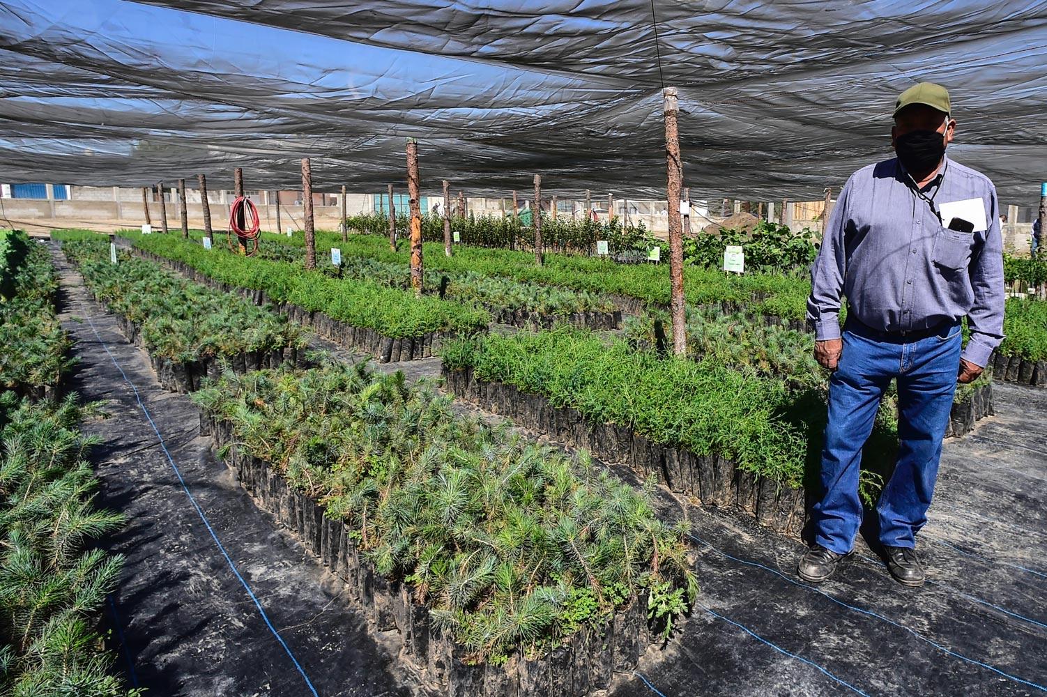 sembrando-vida-perote-agricultor
