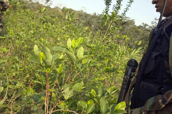 Un miembro de la Policía Antidrogas peruana al ingresar a una zona de cultivo de hoja de coca en el centro poblado de Comunpiari, situado en el Valle de los Ríos Apurímac y Ene (VRAE) (Perú).