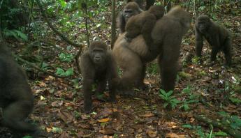 gorilas-rio-cross