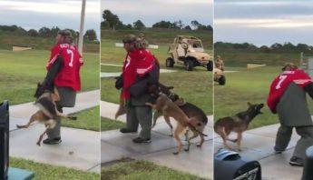 perros de ataque