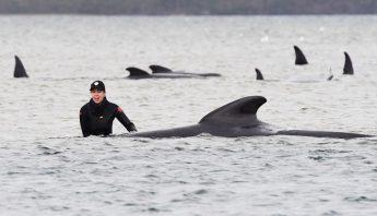 ballena-destacada