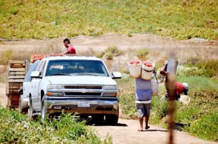 Las jornadas de los trabajadores son de hasta doce horas sin derecho a guardería por parte del IMSS.