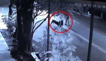 ataque-perro